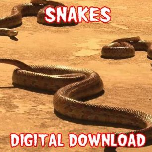 SNAKES DIGITAL DOWNLOAD
